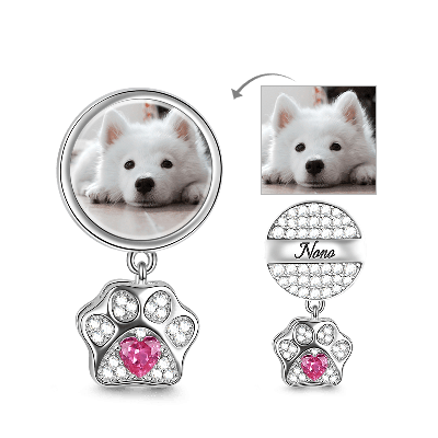 Charm Photo Chien Chat